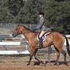 Short Stirrup/Rusty Stirrup Hunter under Saddle