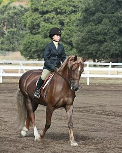 Short Stirrup/Rusty Stirrup Hunter Under Saddle - 10