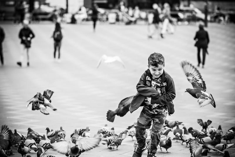 Frightful pigeon  joy