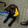 120115_RenderServiceDogTraining-0009