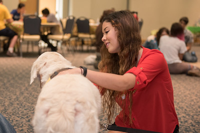 Lauren Untalan takes a moment to pet one of the many canine friends during PAWs on the Island