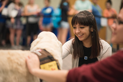 Clarisa Salinas takes a moment to pet one of many canine visitors on campus during PAWs on the Island.