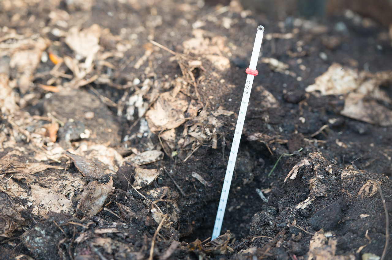 A thermometer is placed at the center of the compost to take a measurement of the heat produced.