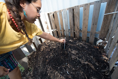 Melissa Zamora with islander green, places a thermometer into the compost to display the heat radiating at the center.