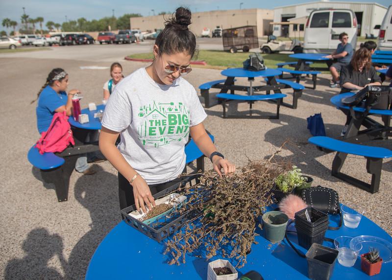 Student Ana Salamanca collecting basil seeds.