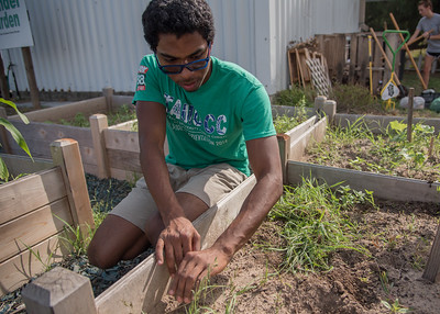 Student Roderick Chapman pulling weeds.