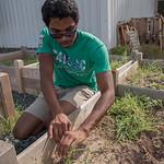 Student Roderick Chapman pulling weeds.