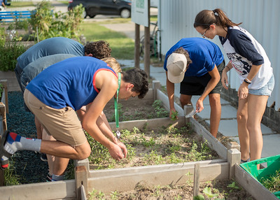 Students pulling weeds.