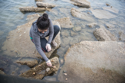 Volunteer Ana Salamanca places hermit crab shells on a set of rocks off the Corpus Christi Bay.