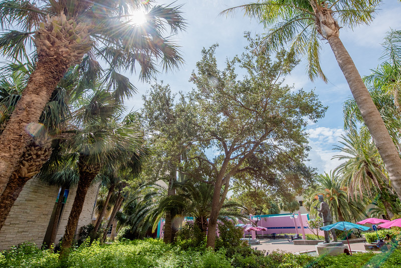 The sun shines through the foliage in Hector P. Garcia plaza.