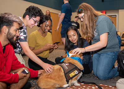 Students interact with different dogs during Paws on the Island.