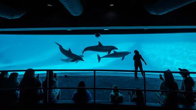 060718 Texas State Aquarium Islander Camp