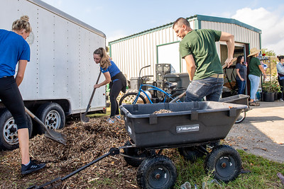 Alex Amos (left) Daniela Bergamann, and Mark Rolph move compost from one stage to another.