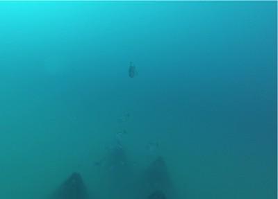 053018 Reef Grant