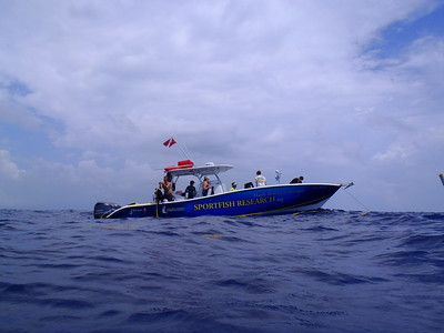 yellowfin_Diving_3