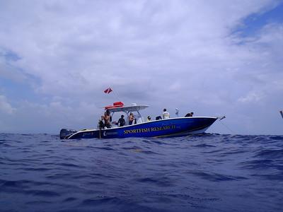 yellowfin_Diving_3