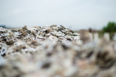 2019_0518-OysterReefRestoration-3100