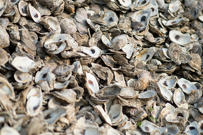 2019_0518-OysterReefRestoration-3159
