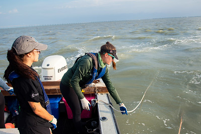 Danielle Zimmermann makes sure the ropes do not get tangled as they dredge in the Aransas Bay sampling station.