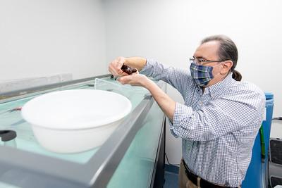 Dr. Riccardo Mozzachiodi retrieves a Aplysia Californica (Sea Slug) from it's specialized enclosure.