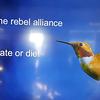RebelAlliance