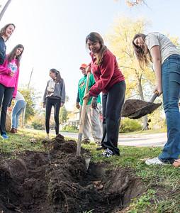 Edgewood Grove Tree Planting Event