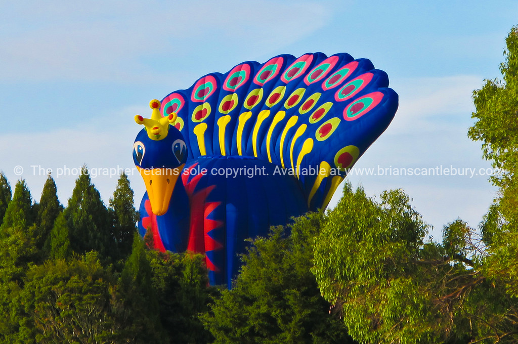 Big bird, hot air balloon at Bolloons over waikato 2010.