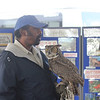 <b>Clive Pinnock of Okeeheelee Nature Center with Great Horned Owl</b>  Everglades Day, February 11, 2012