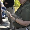 <b>Palm Beach Zoo shows off a baby gator</b> Everglades Day, February 14, 2015 <i>- Anthony Lang</i>