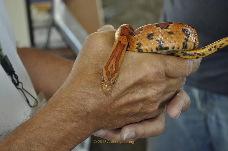 <b>Snake from Green Cay Nature Center</b> Everglades Day, February 9, 2013 <i>- Tony Lang</i>