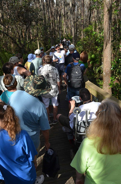 <b>Bruce Rosenberg leads Swamp Stroll</b> Everglades Day, February 9, 2013 <i>- Ryan Murphy</i>