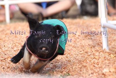evergreen state fair scwga 9/1/2013