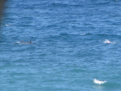 dophins!