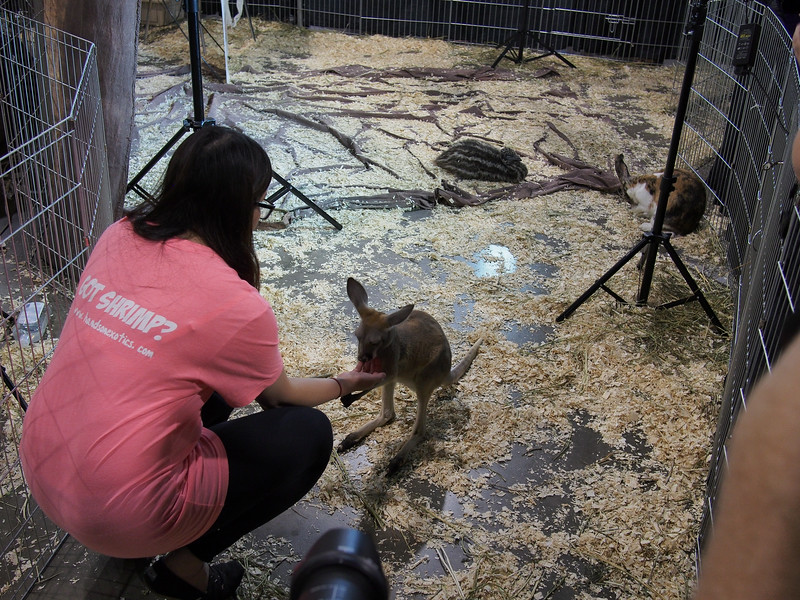 June 1/13 - Exotic animals at Henry's Exposure Show, International Centre in Mississauga