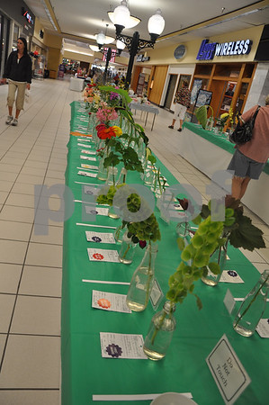 Horticulture exhibits. Closest to the camera are the first and second place winning Bells of Ireland entries. First place Eleanor DenHartog, second place Judith Walrod