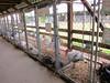 Poultry<br /> Elkhart County 4H Fair 2012