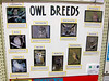 Nature - Owls<br /> Elkhart County 4H Fair 2012