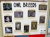 Nature - Owls<br /> Elkhart County 4H Fair 2012