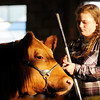 Don Knight | The Herald Bulletin<br /> The setting sun illuminates Kenzie Fisher and her steer during the county raised steer judging at the 4-H Fair Beef Show on Tuesday.