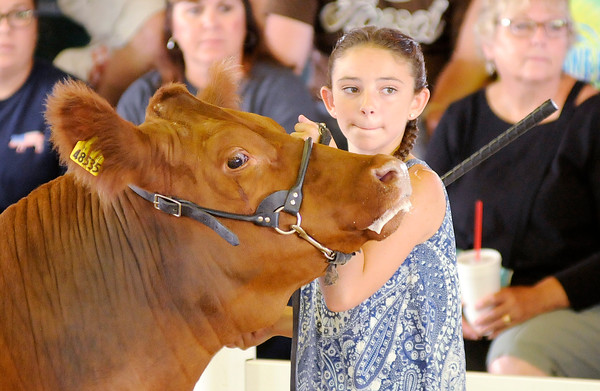 Don Knight | The Herald Bulletin<br /> 4-H Fair Beef Show.