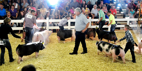 John P. Cleary   The Herald Bulletin<br /> Swine judge Kevin Ellis looks over the champion Gilts as he makes his decision of choosing a grand champion out of the group.