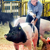 John P. Cleary | The Herald Bulletin<br /> Connor Utterback 15, shows his champion Cross Bred Barrow during the<br /> Madison County 4-H Fair Championship Swine Show Monday evening.