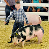 John P. Cleary | The Herald Bulletin<br /> Madison County 4-H Fair Championship Swine Show.