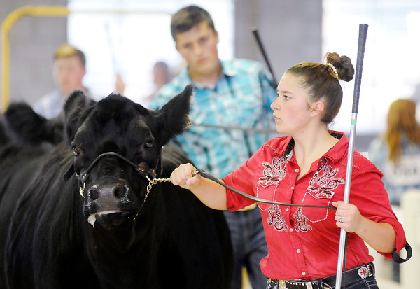 Don Knight   The Herald Bulletin<br /> Supreme Showmanship competition at the 4-H Fairgrounds on Thursday.