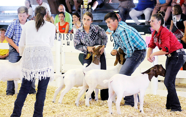 Don Knight | The Herald Bulletin<br /> From left, Miller Smith, Hannah Alcala, Kalib Mauck and Terra Weber show goats as they compete in the Supreme Showmanship contest at the 4-H Fairgrounds on Thursday.