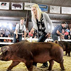 John P. Cleary | The Herald Bulletin<br /> Anahleisa Forrester keeps her Duroc Barrow moving forward around the show ring during the 4-H Swine Show Monday at the Madison County 4-H Fair.