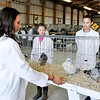 John P. Cleary | The Herald Bulletin<br /> 4-H Fair Pigeon Show judge Emma Noble looks over the Chinese Owl breed birds of Emily Van Ness, 12, and her sister Jessica, 16, as they compete in the same class Wednesday.