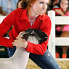 John P. Cleary | The Herald Bulletin<br /> Megan Isaacs has to use a little persuasion on her Hampshire breed market lamb Wednesday to get it to move around the show ring during judging in the 4-H Sheep Show.