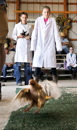 John P. Cleary | The Herald Bulletin<br /> Emily Van Ness, 12, right, watches as her Parlor Roller breed pigeon rolls along the ground as her sister, Jessica, 16, looks on waiting her turn with her bird to compete Wednesday during the 4-H Pigeon Show.