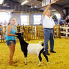 Don Knight | The Herald Bulletin<br /> Dennis Jackson acknowledges a bidder as Khloe Wilson auctions her goat during the livestock auction at the Madison County 4-H Fair on Thursday. This was Jackson's 40th year working a 4-H auction.
